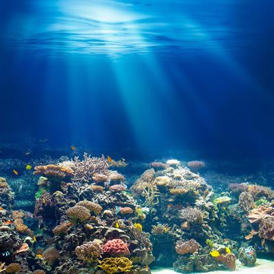 海の底の風景